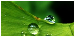 rain_leaf